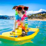 dog friendly air charter airline bahamas caribbean
